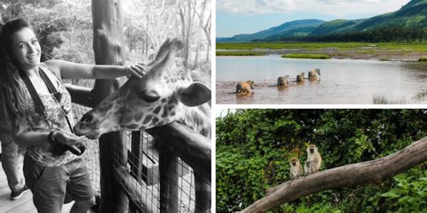 Kenya blog post safari